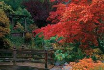 giardini piante prati