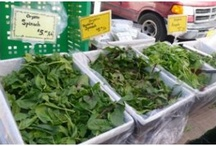 Jackson Heights Green Market... Mmmmm... Tasty