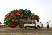 India / by Nelson Coelho