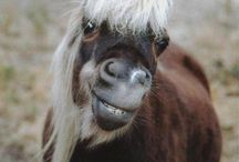 Silly Horses! / Silly pics of horses that make us smile and laugh.
