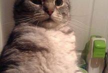 Pet Selfie's / by PDSA