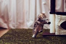 En katt, katten, katter, katterna!