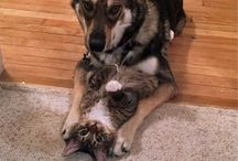 Love dogs and cats