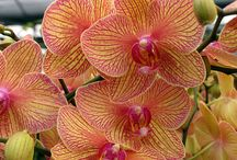 Orchids / by Linda Hurst