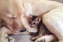 Good Friend Animals - Buddies! / Look at how adorable these animal buddies are!