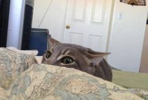 Meow / Duh