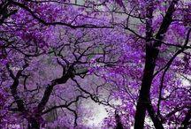 Purple crazy / by Leash Edwards