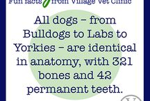 Fun Pet Facts