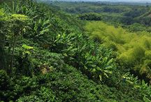 paisajes de mi Colombia