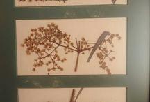 TRABAJOS RAUL NIETO / Obras realizadas principalmente con hojas y otros materiales orgánicos