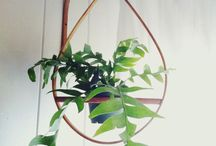 Plants (Interior design) / How to make your little green friend a real designer piece. / by Eveline Mos