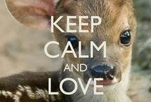 keep Calm *.*
