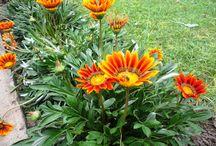 Mi jardín / Durante el verano, cada año trabajo en el jardín de la casa de mi familia