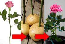 Rostliny-pěstování