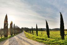 Tuscany / Tuscany