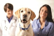 Pet Health Care / Take good care of your pet / by Dogs N Pawz