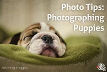 Dog Photography tips and tutorials / Mel Hammonds of Fetching Images gives us detailed tips on how to photograph dogs from the lifeanddog.com site as well as other tips from the internet!