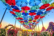 miracle garden whaouuuu