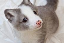Pet/Animal Favorites