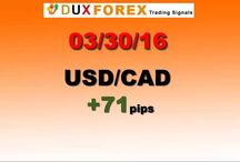 Daily Forex Profits Performance 03/30/16