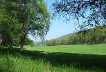Delliefure Natural Burial Woodland / Delliefure lies within the beautiful Cairngorms National Park, overlooking the March Pool on a bend in the River Spey, famous for its salmon and sea-trout fishing.