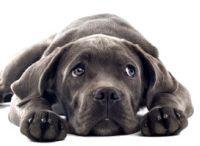 Cute Dogs / by Lisa Flynn