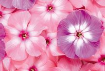 Flores ✨