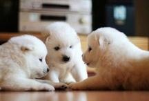 Animals / Bine ati venit pe pagina Pinterest cu Animale. Aici vom adauga poze, video-uri si chiar articole interesante despre pui de animale. Tot aici veti afla cand se vor posta animale noi in Wiki animale http://animale.gokids.ro).