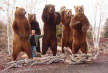 HUGE BEARS