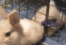 Videa Zajace