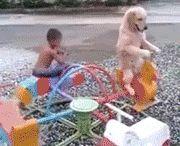 いぬ   dogs / もふもふは世界を平和にすると思うのです。