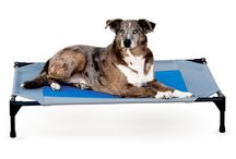 Indoor/Outdoor Pet Dog Beds / Raised bed allows more air flow to keep your dog cooler. Raised beds ease muscle strain and keep pets off cold,  buggy, damp ground.