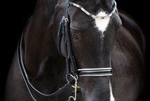 Horse / by Beata Sondej