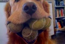 Dogs = love