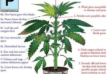 Plant nutrition guide