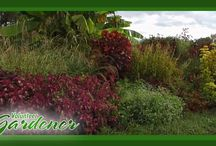 Annuals/Tropicals