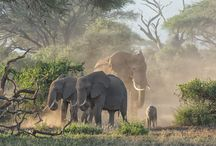 Travel with Capture Africa Tours / A safari is not only a journey to Africa; it is a journey into your soul. A decision made to go to Africa is one that will live with you for a lifetime, but a fair warning, your first trip will not be your last!