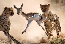 Animals / by Elyse Nakashima