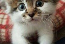 cuteness overload