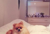 Toy dogs / Cute