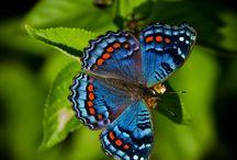 Butterflay/Mariposas