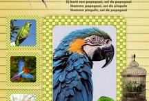 grappige teksten papagaai