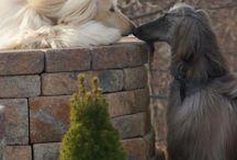 Dogs, soo beautiful....