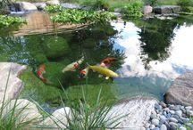 Ponds and Water Gardens / Outdoor water gardens, ponds, fish, and aquatic wildlife.
