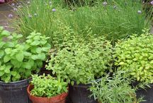 Herb Gardens / by Something About Silver