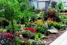 Outdoor ideas / Going to get rid of our front lawn! / by Maureen Kuppe