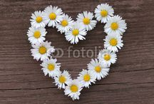 Whoops-a-daisy / by Fotolia