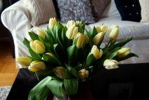 Kwiaty/ Flowers