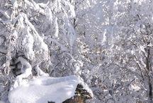 Suomi, luonto
