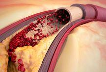 Hart, aderen en slagaderen / Inzicht in je eigen lichaam